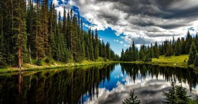 ¿Por qué no cuidamos nuestros bosques?