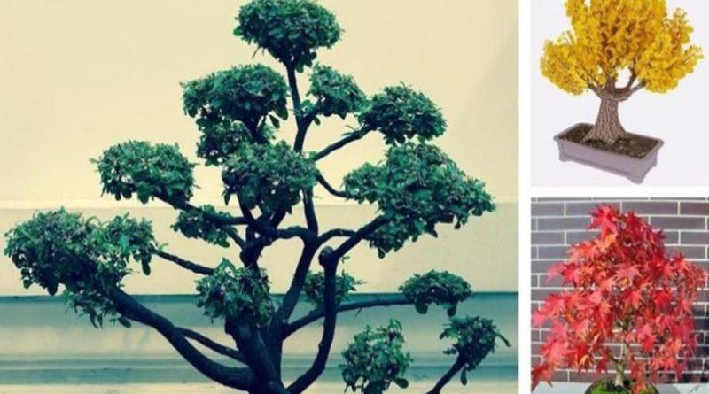 bonsái online de interior baratos a buen precio