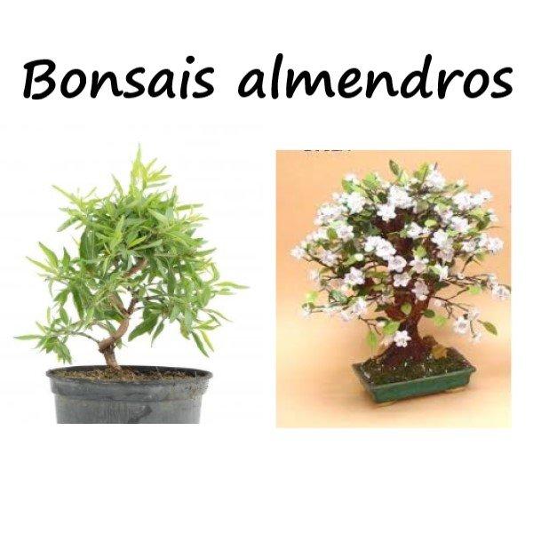 bonsai con flores